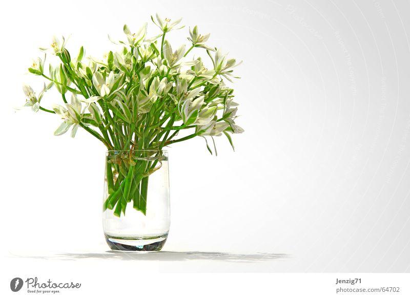 statt schnaps. Blume Glas Blumenstrauß Spirituosen Schnapsglas