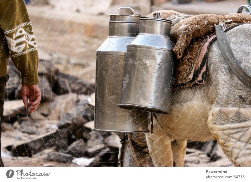3eWeltTransporter Ferien & Urlaub & Reisen Ernährung Armut Güterverkehr & Logistik Afrika Mitteilung Ägypten Eindruck Kannen Behälter u. Gefäße Esel