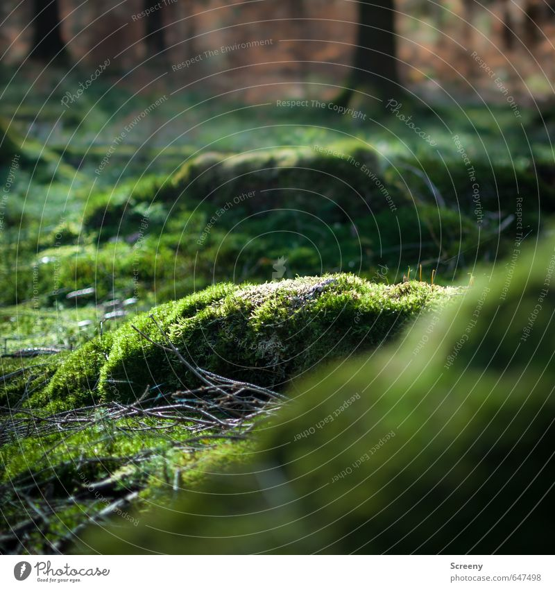Weicher Teppich... Natur Pflanze Baum Moos Wald Duft weich grün Gelassenheit ruhig Erholung Idylle Vordergrund Hintergrundbild Ast Waldboden Farbfoto