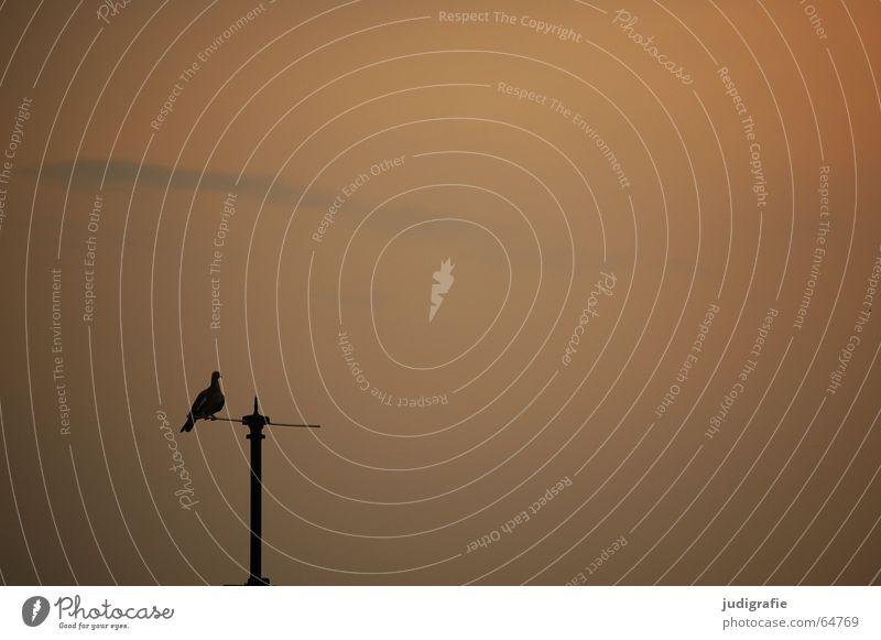 Abendruhe Himmel ruhig schwarz orange Vogel Aussicht Strommast Taube Abenddämmerung Antenne Stab