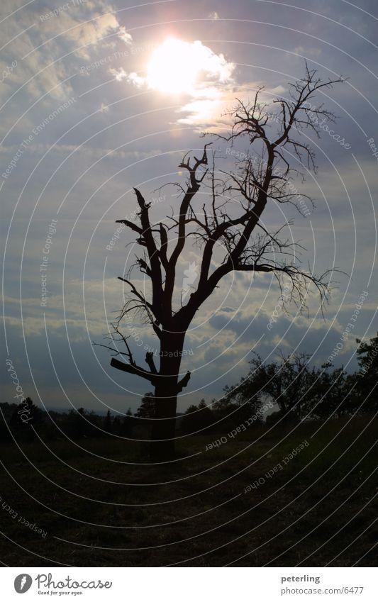 Black Hole Sun Baum Gegenlicht Trauer Tod Sonne