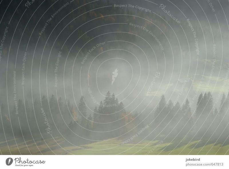 Da unten im Tale Natur grün Nebel Nadelbaum Nadelwald Rauchwolke
