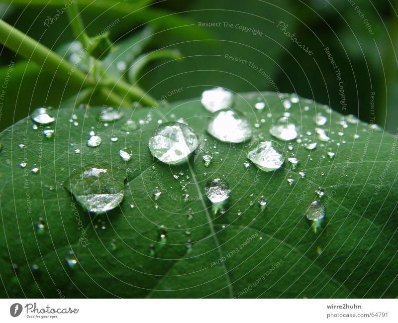 plitsch platsch Wasser grün Blatt Regen Wassertropfen