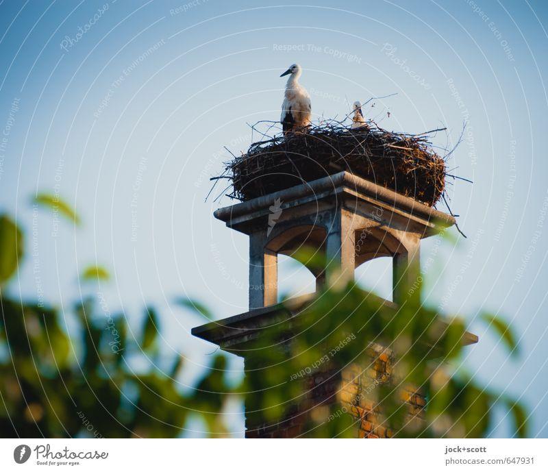 Wachtturm für Störche Wolkenloser Himmel Schönes Wetter Mittelfranken Schornstein Wildtier Storch 2 Tier Tierpaar Gesundheit Zusammensein natürlich oben Wärme