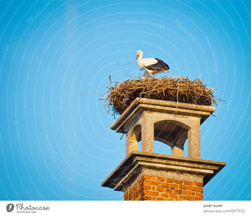 Klappern im Nest schön Sommer Wärme Leben oben Luft Zusammensein Wildtier Tierpaar stehen authentisch hoch Schönes Wetter Sicherheit planen Wolkenloser Himmel