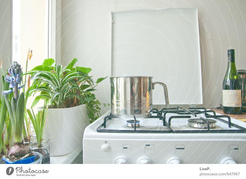 Topf sucht Deckel Pflanze Frühling Autofenster Lifestyle hell Wohnung Häusliches Leben Freizeit & Hobby Ernährung genießen Küche Wein Abendessen Mittagessen