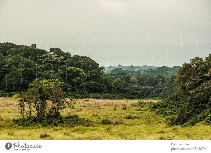 Kakamega Regenwald Natur Ferien & Urlaub & Reisen Pflanze Baum Landschaft Tier Ferne Wald Umwelt Wiese Gras Luft Nebel Tourismus Sträucher