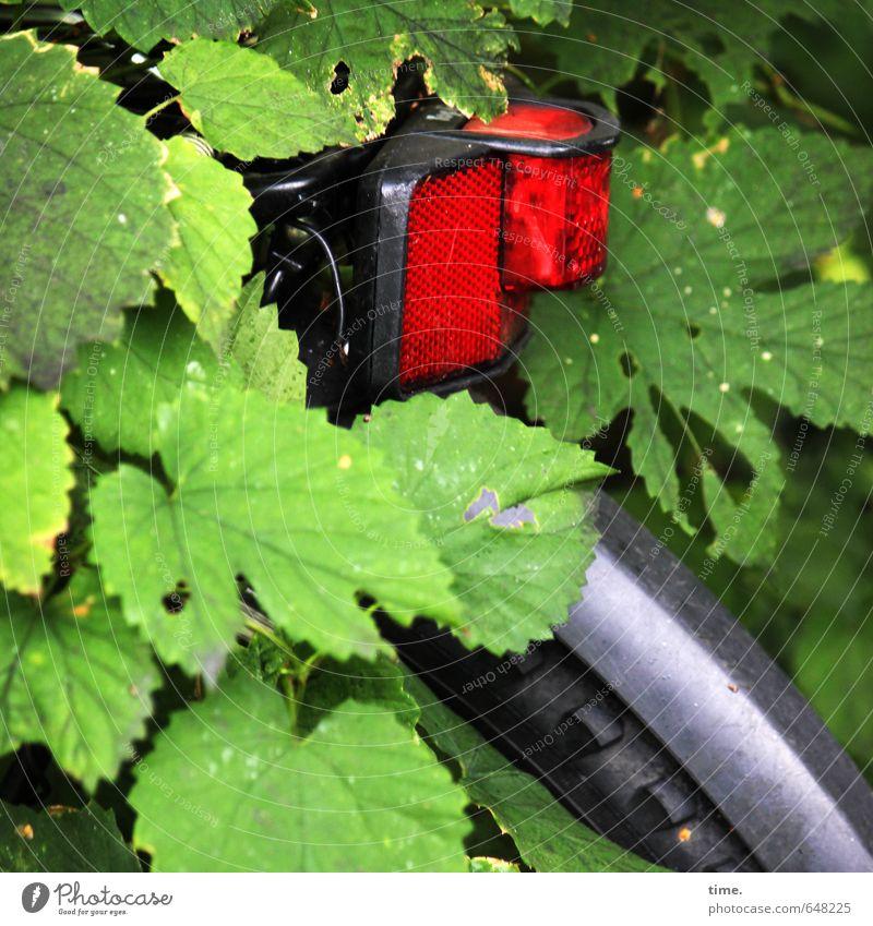 Ausflug ins Grüne Baum Blatt Verkehr Verkehrsmittel Fahrradfahren Wege & Pfade Rücklicht Fahrradrücklicht Fahrradtour Reifenprofil grün rot silber Partnerschaft