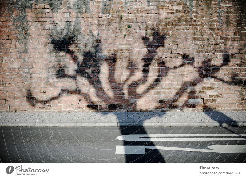 Rasen ist gefährlich | Mahnmal. Baum Menschenleer Straße Stein Ziffern & Zahlen Schilder & Markierungen ästhetisch bedrohlich braun grau Gefühle Tempo 30 Mauer