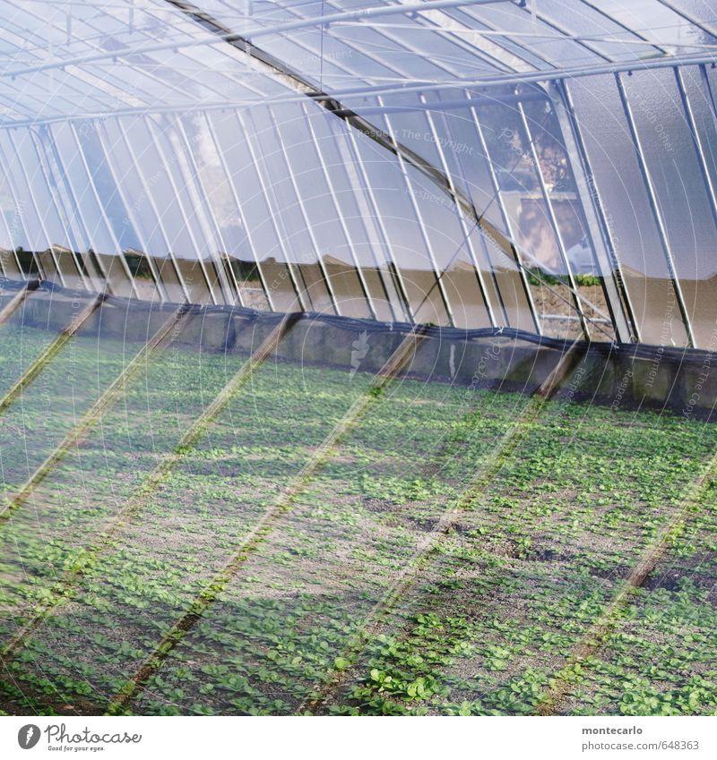 Glashaus Natur grün Pflanze Sonne Blatt kalt Fenster Umwelt Frühling natürlich Metall leuchten Wachstum authentisch frisch