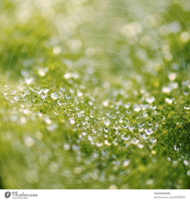 Osterperlen Natur grün Wasser Pflanze Blatt kalt Umwelt Frühling klein natürlich glänzend elegant authentisch frisch nass Wassertropfen
