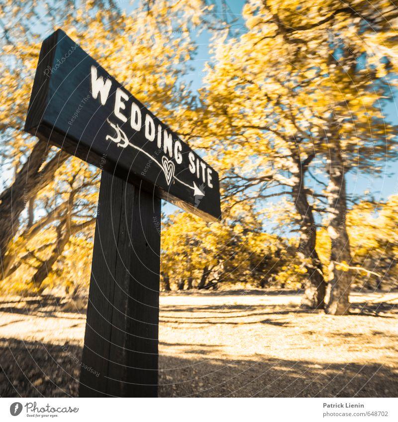 Wedding Site Natur Ferien & Urlaub & Reisen Pflanze Sommer Sonne Baum Erholung Landschaft Ferne Wald Umwelt Leben Glück Gesundheit Freiheit Feste & Feiern