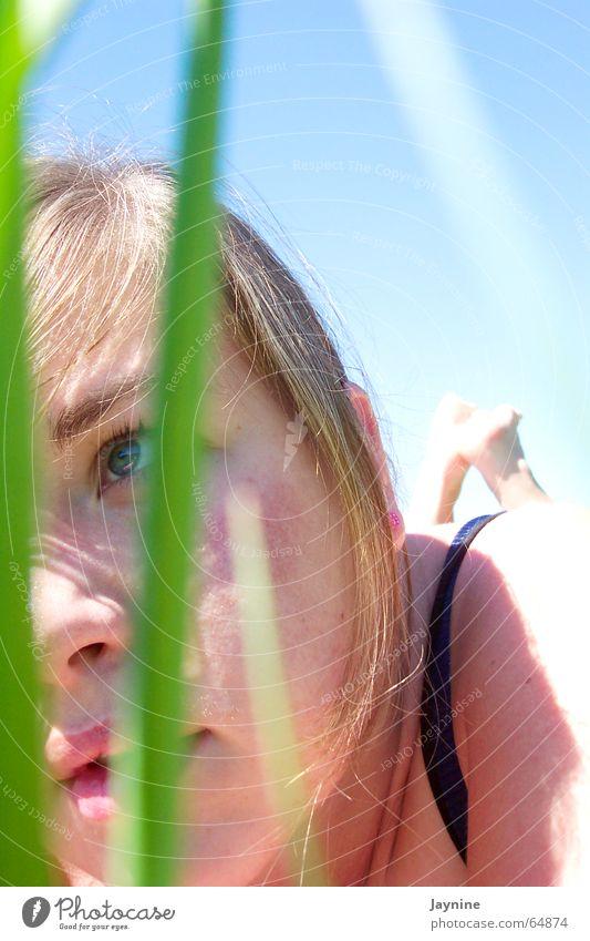 Sommergras Sonne grün blau Gras