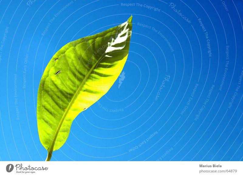 Sunshine Himmel grün blau Sommer Freude ruhig Blatt Wärme Physik Gelassenheit Schönes Wetter verstrahlt
