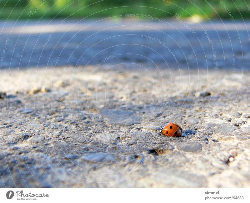 Einsames Glück Einsamkeit Straße klein Beton Asphalt Insekt Punkt Marienkäfer zierlich Glücksbringer punktuell