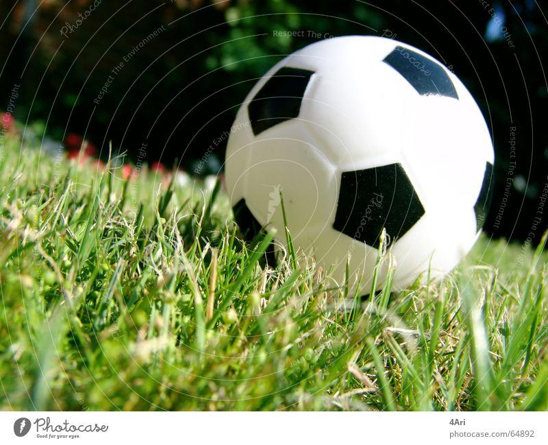 Fuppes Gras Wiese Ball Rasen Nahaufnahme Menschenleer klein Stoppel Schwache Tiefenschärfe 1 Kugel Farbfoto Fußball