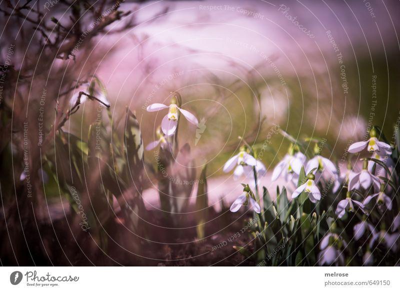 Frühlingshauch Natur grün weiß Pflanze Blume Blatt Winter Umwelt Wiese Gras Blüte Garten braun Park Wind Sträucher