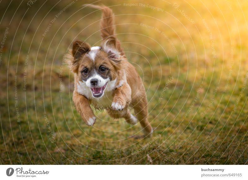 Feuer unterm Hintern Hund grün weiß Freude Tier gelb Tierjunges Leben Herbst Gras klein Glück springen fliegen orange Geschwindigkeit