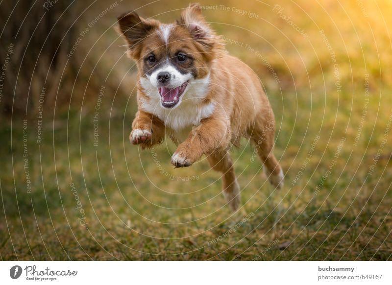 Fröhlicher Welpe Hund grün Freude Tier Tierjunges Leben Herbst Spielen klein Glück außergewöhnlich springen Stimmung orange Geschwindigkeit verrückt