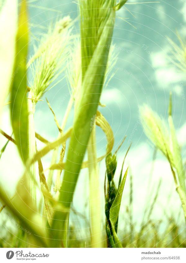 SOMMERFREUDE | hamonie wellness life leben sommer pastell Natur schön Himmel Sonne grün blau Pflanze Sommer Freude Wolken Ernährung Leben Erholung Wiese Gefühle Gras