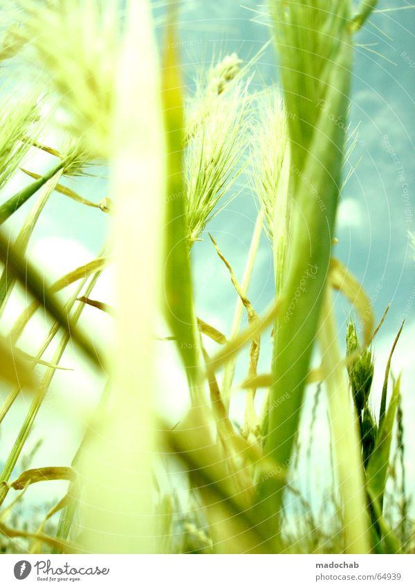 SOMMERDUFT | hamonie wellness life leben sommer pastell Natur schön Himmel Sonne grün blau Pflanze Sommer Freude Wolken Ernährung Ferne Leben Erholung Wiese Gefühle