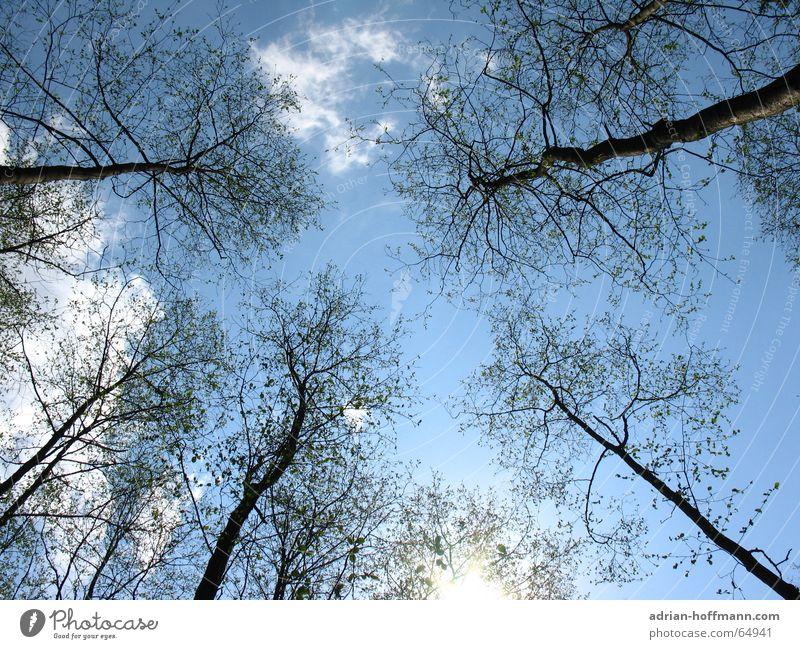 Der Tag danach Wald Baum Winter kalt Wolken Einsamkeit Physik Hoffnung trist verloren Holz stehen Beerdigung Open Air Luft Umwelt Waldsterben nicht italien blau