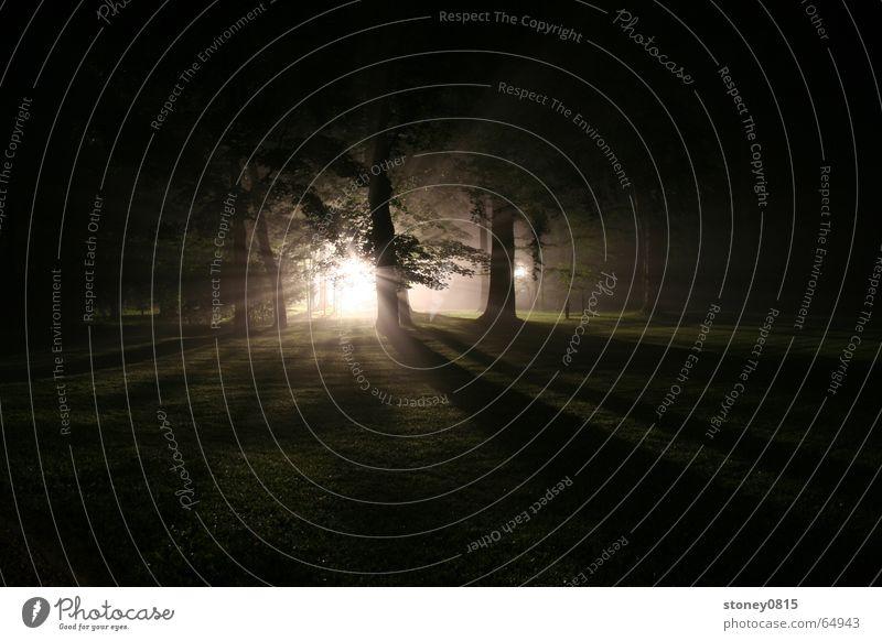 ...im walde 1 Wald Nebel Gegenlicht dunkel mystisch Beleuchtung hell Schatten Sonne