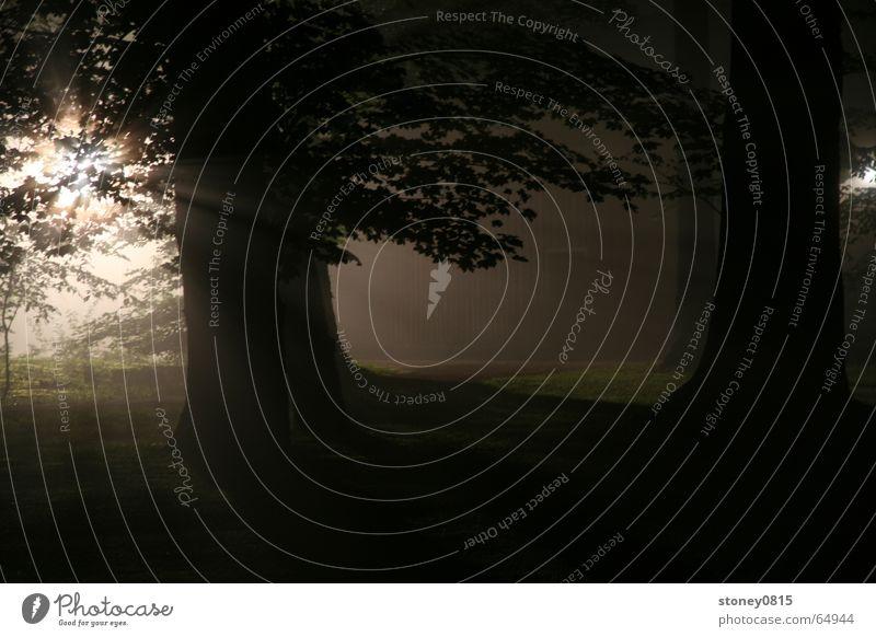 ... im walde 2 Sonne Wald dunkel hell Beleuchtung Nebel mystisch