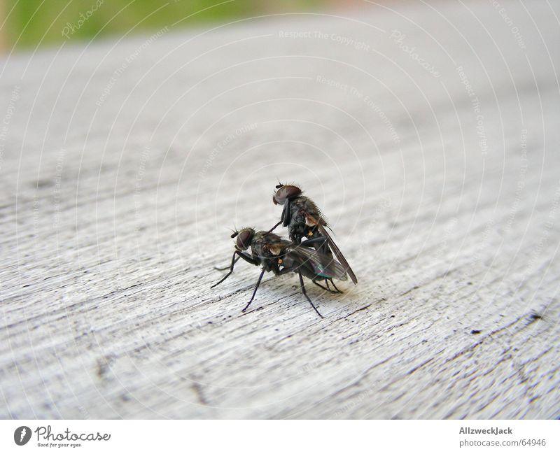Mc Fly's Doggystyle Fliege fantastisch gehorsam Müdigkeit weiß hart Holz Zärtlichkeiten Lust Außenaufnahme Voyeurismus lüstern froh grinsend stöhnend