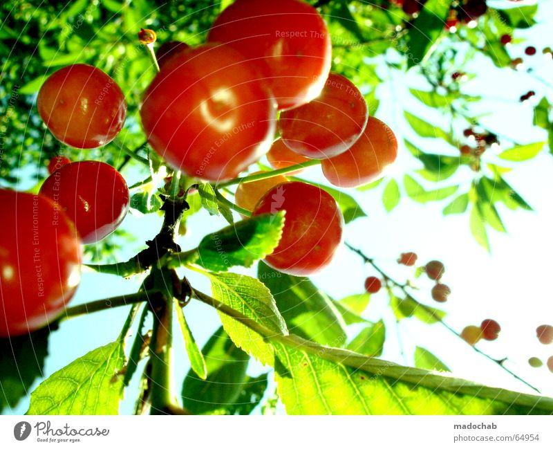 SÜSSE FRUCHT LIEBE | kirschen obst sommer sonne glück Himmel Natur grün rot Pflanze Sonne Sommer Freude Erholung Leben träumen Gesundheit Kraft Frucht Herz