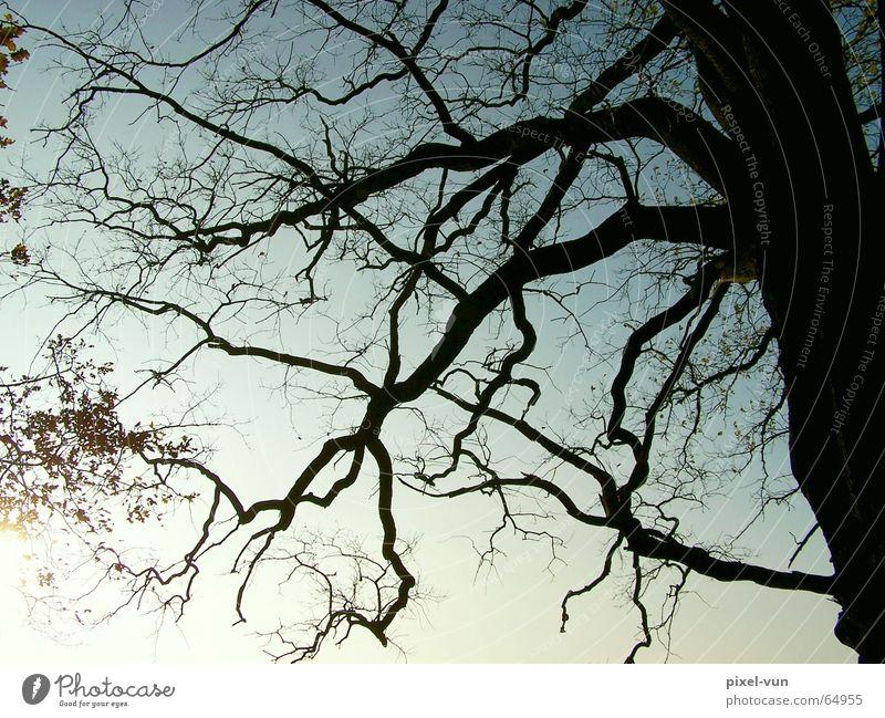 Skurril Baum Eiche alt Laubwald Umweltschutz Gegenlicht Sonne Dämmerung Geäst Baumstamm Baumrinde Zweig Ast Blatt Schatten Silhouette Himmel