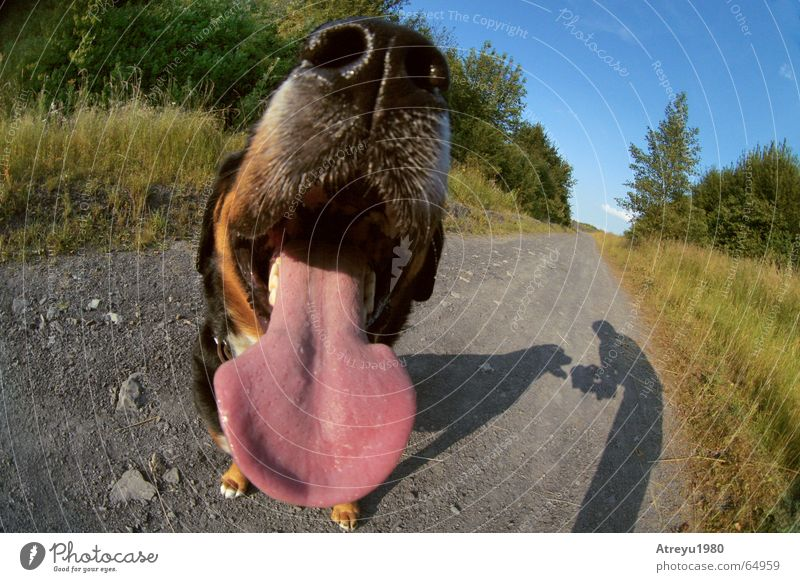 mund auf augen zu Tier Hund lustig Nase Fell atmen Zunge Schnauze Atem sabbern Übelriechend Mundgeruch Berner Sennenhund