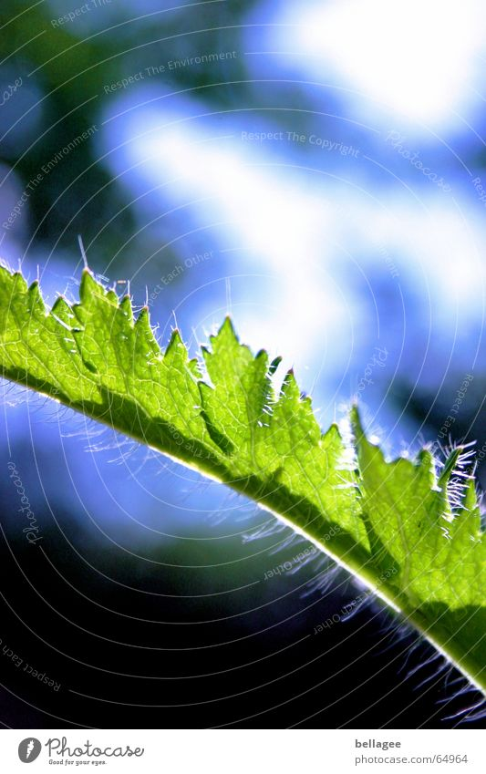 grün und blau... Blatt Außenaufnahme Licht Stengel Muster schön Detailaufnahme Pflanze Himmel Haare & Frisuren Strukturen & Formen Lampe Natur Anschnitt