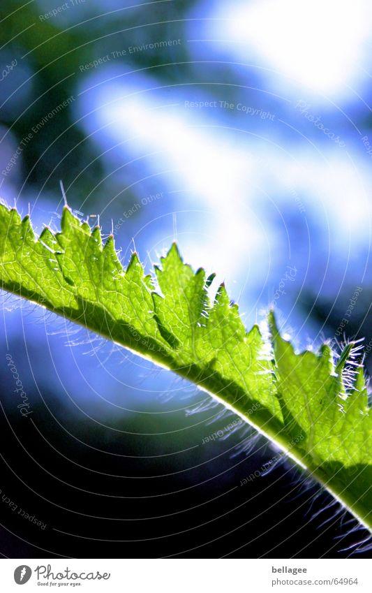 grün und blau... Natur schön Himmel grün blau Pflanze Blatt Lampe Haare & Frisuren Stengel