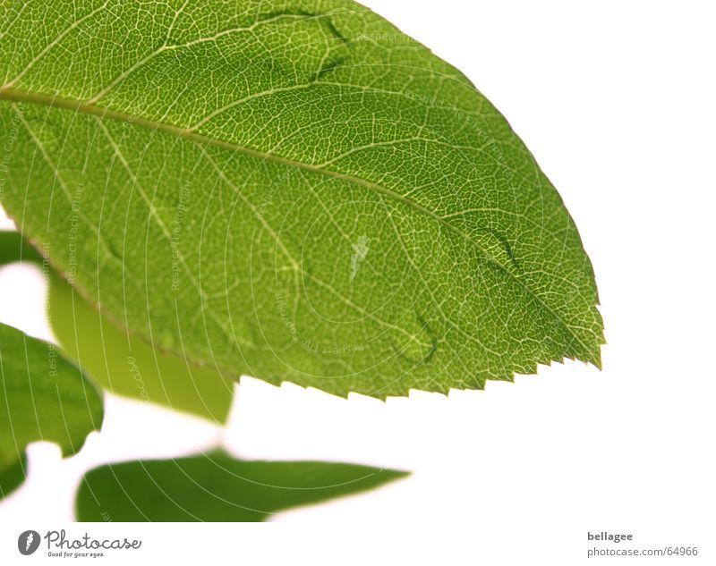 wenn blätter weinen Blatt grün weiß Außenaufnahme Baum Unschärfe Gefäße Muster Wassertropfen Strukturen & Formen Natur