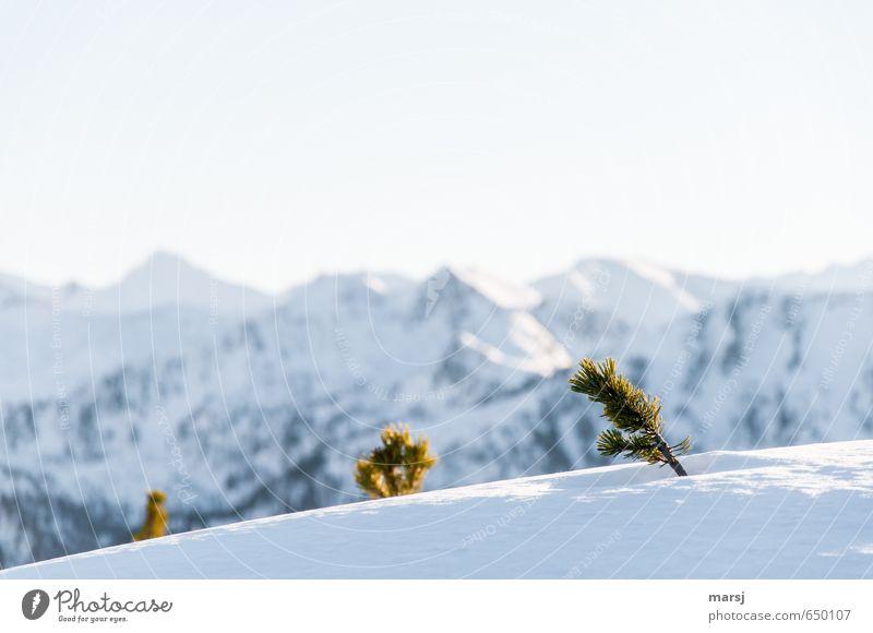 l l \ Ferien & Urlaub & Reisen Tourismus Ferne Freiheit Winter Schnee Winterurlaub Berge u. Gebirge Natur Landschaft Pflanze Himmel Wolkenloser Himmel Herbst