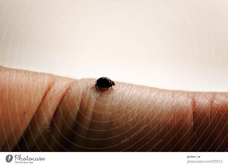 Wüste Marienkäfer Insekt Tier Hand Finger Hoffnung berühren zart krabbeln Einsamkeit klein Käfer Schiffsbug Natur Makroaufnahme desolat Glück Falte nützling
