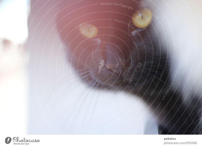 Hauspantherchens Mission Katze schön Tier schwarz grau natürlich träumen rosa authentisch wandern beobachten lernen Coolness Neugier sportlich Vertrauen