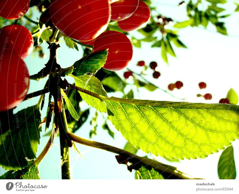 KIRSCH ME UP Himmel Natur grün rot Pflanze Sonne Sommer Freude Erholung Leben träumen Gesundheit Kraft Frucht Herz frisch