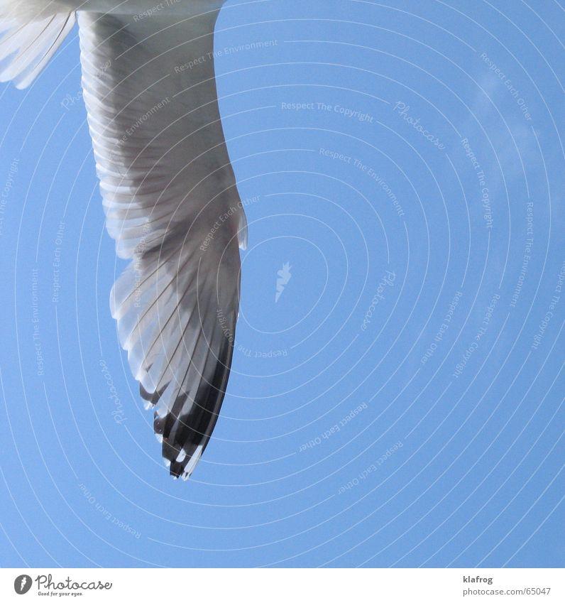 Eine halbe Möwe macht noch keinen Sommer Silhouette Flügel Küste Ferien & Urlaub & Reisen Meer Himmel Vogel frei Freiheit Wind Profil fliegen blau Feder