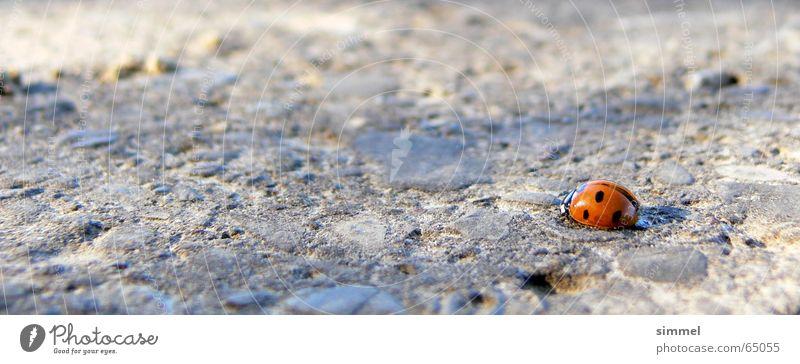 Einsames Glück II rot Einsamkeit klein Insekt einzigartig Mitte Symbole & Metaphern Marienkäfer verwundbar Ausgrenzung Glücksbringer flüchtig punktuell