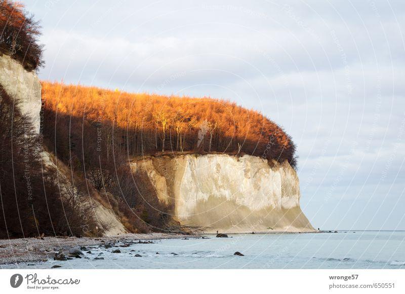 Waldleuchten Himmel Natur blau weiß Wasser Pflanze Baum Landschaft Winter Strand Küste grau braun Horizont Wellen Insel