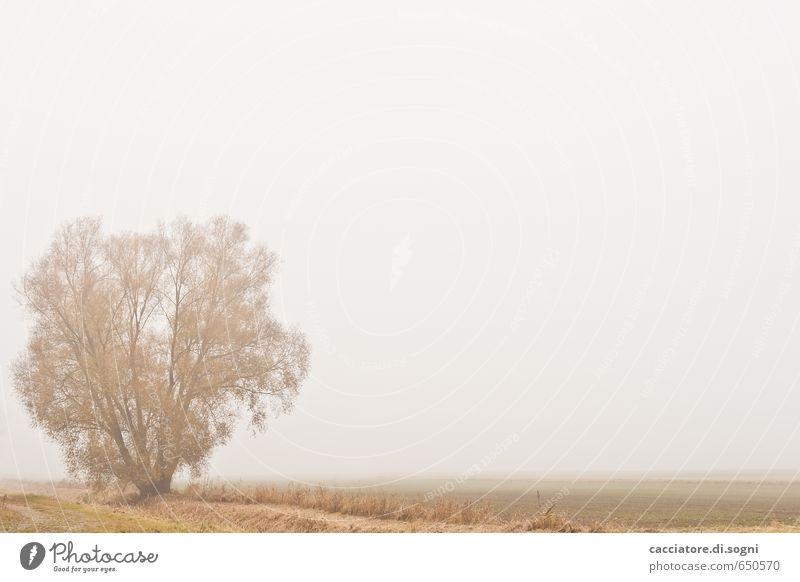 Alleine Natur Landschaft Pflanze Herbst Nebel Baum Feld einfach Unendlichkeit hell grau orange weiß Gefühle ruhig bescheiden sparsam demütig Langeweile