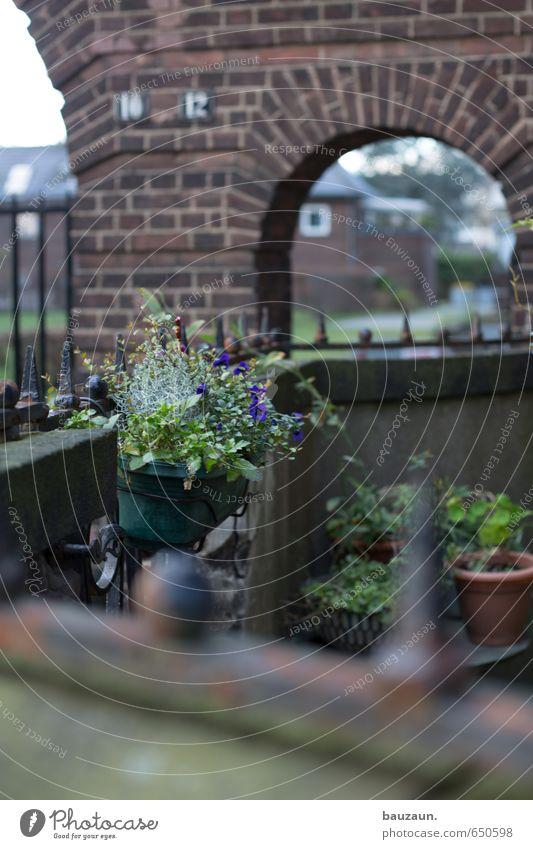 blümchen. Stadt grün Pflanze Blume Haus Wand Wiese Gebäude Mauer Blüte Stein Garten braun Metall Park Fassade