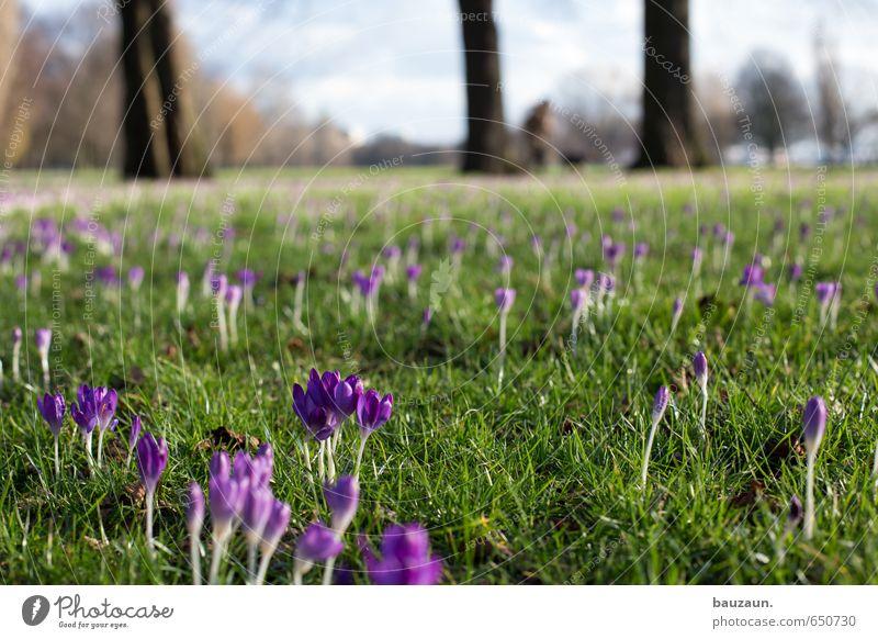 frühling breit. Wohlgefühl Zufriedenheit Erholung ruhig Himmel Sonne Frühling Pflanze Baum Blume Gras Blüte Krokusse Garten Park Wiese Blühend Duft entdecken