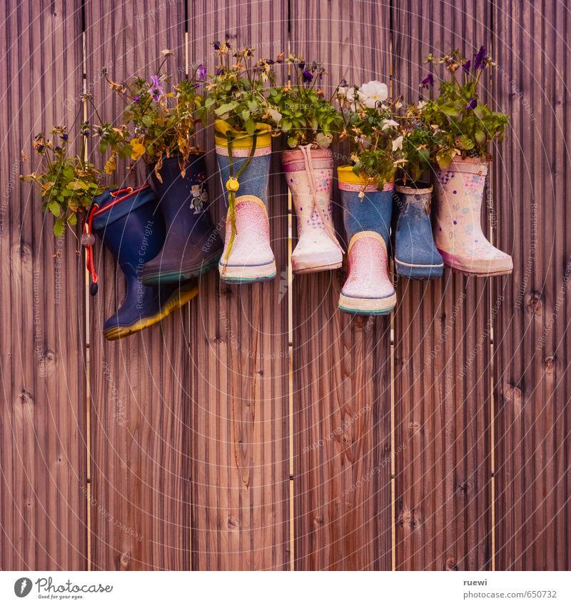 Recycling alt Pflanze Sommer Blume Frühling Blüte Stil Holz Wohnung Freizeit & Hobby Häusliches Leben Lifestyle Kindheit Design Dekoration & Verzierung