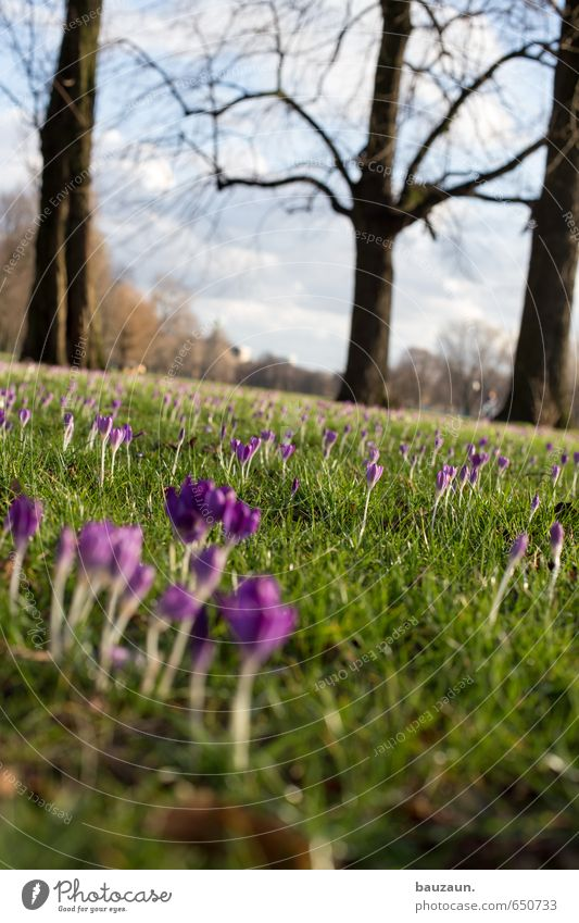 frühling schräg. Wohlgefühl Zufriedenheit Erholung Ausflug Ferne Freiheit Garten Himmel Klima Schönes Wetter Pflanze Baum Gras Blüte Krokusse Park Wiese Blühend