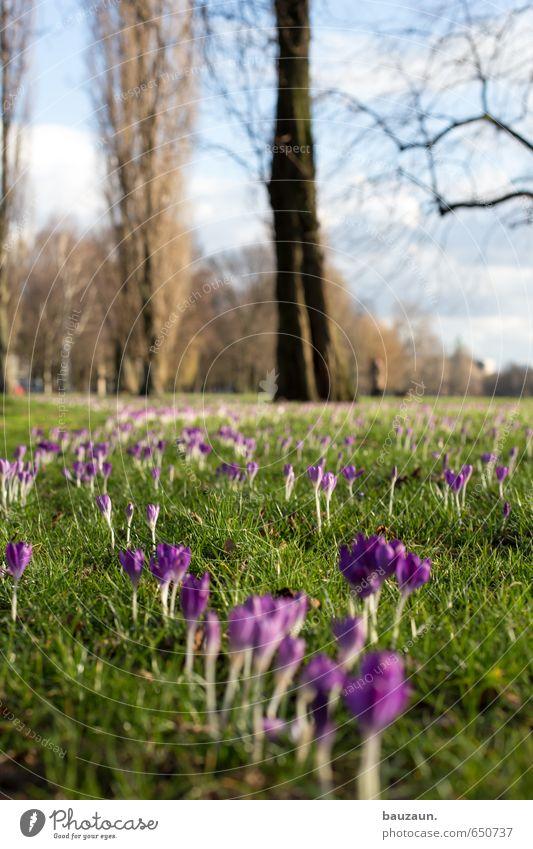 frühling hoch. Allergie Wohlgefühl Zufriedenheit Erholung Gartenarbeit Natur Pflanze Himmel Sonne Schönes Wetter Baum Blume Gras Blüte Krokusse Park Wiese
