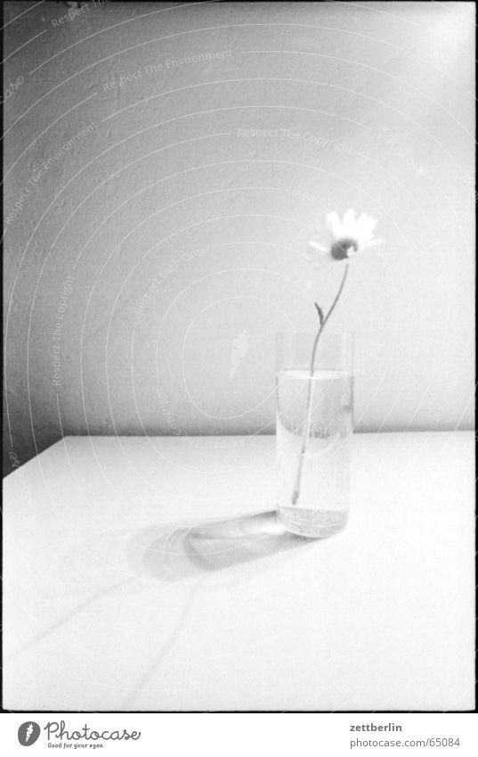 Blume Einsamkeit Denken Konzentration Lust Vase Blumenvase