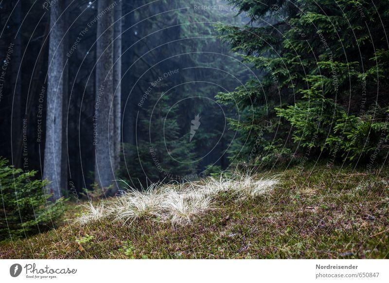 Die Großen und die Kleinen Natur Pflanze Baum Landschaft dunkel Wald Wege & Pfade wandern Hoffnung geheimnisvoll Moos Forstwirtschaft Waldboden Fichte Nadelwald